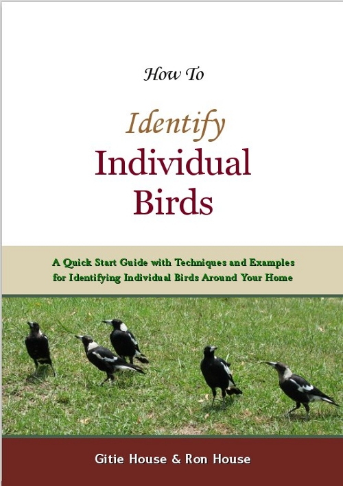 How To Identify Individual Birds